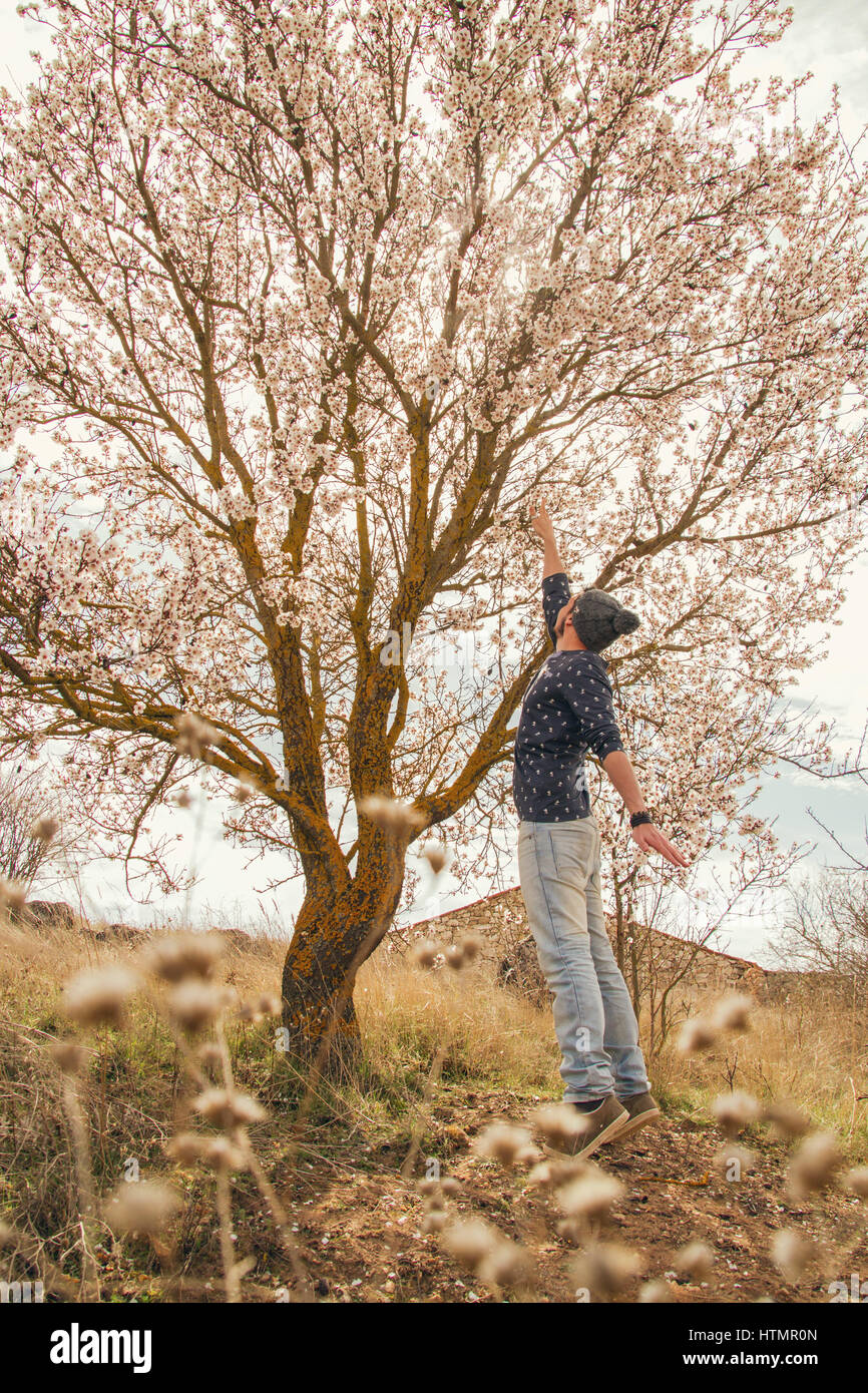 Young man in front of a beautiful almond tree in bloom - Stock Image