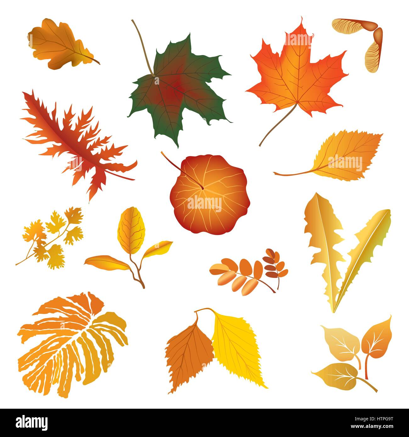 Nature Fall Leaf Icon Set Herb Floral Sign Autumn Leaves Season Stock Vector Image Art Alamy