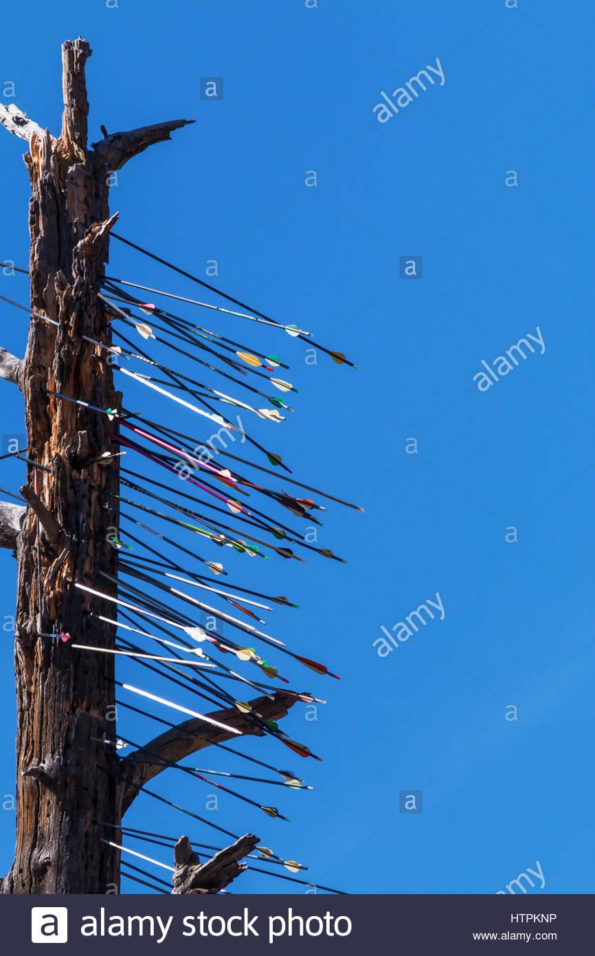 arrows-in-dead-tree-along-highway-arizona-HTPKNP.jpg
