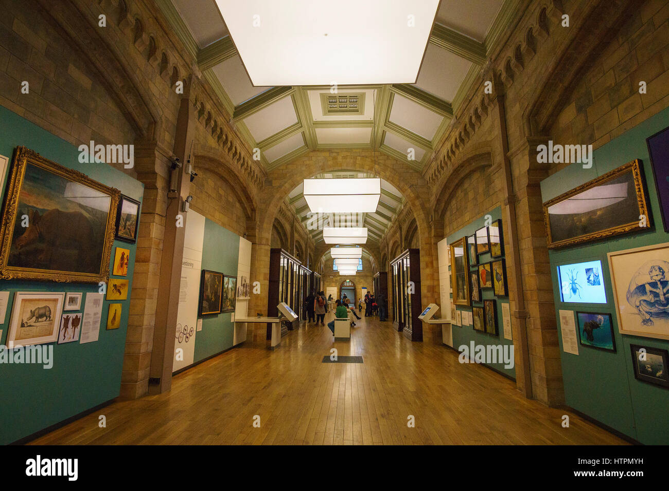 Interior of the Natural History Museum. Established in 1881, the museum houses 80 million items from around the - Stock Image