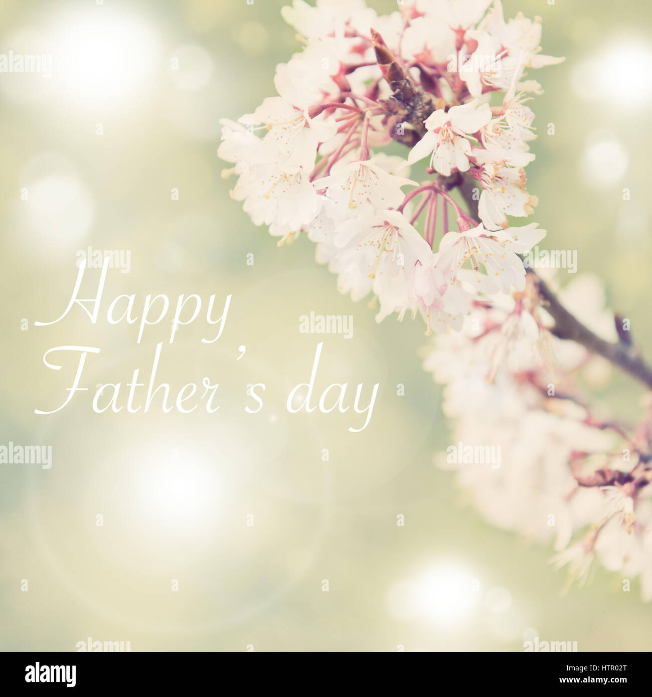 Fathers day concept, Spring border background with white blossom, colorised image with sun flare - Stock Image