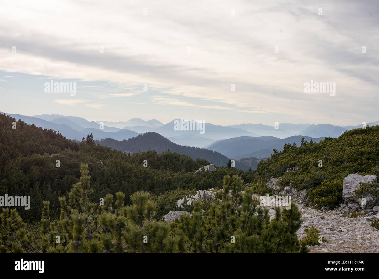 panorama over cavalese - Stock Image