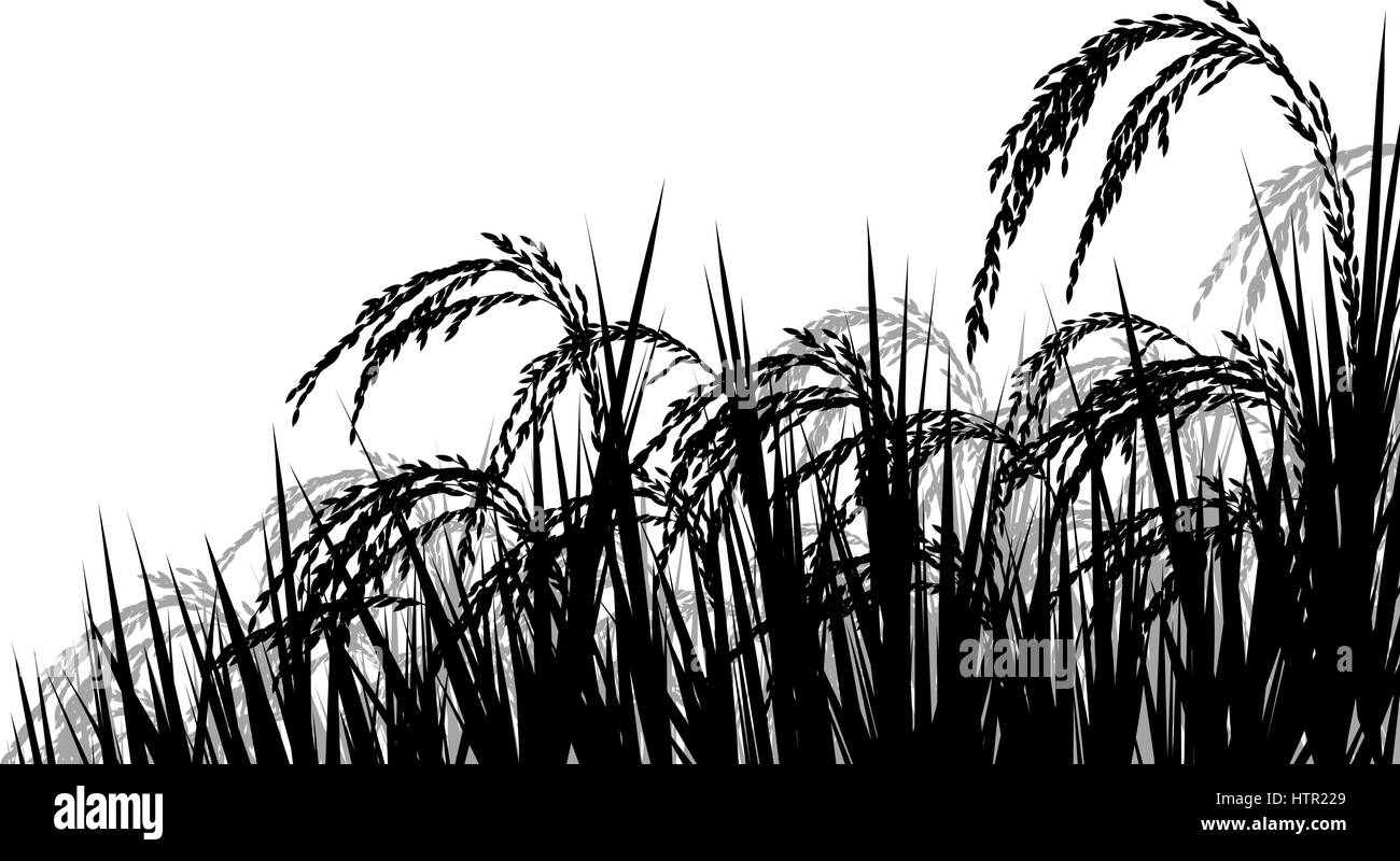 Vector silhouette illustration of ripe rice plant seedheads ready for harvesting - Stock Image