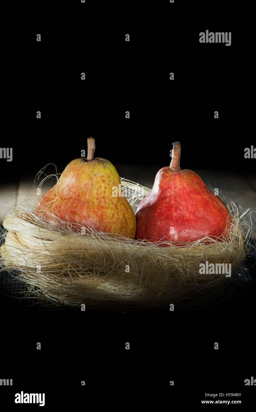 colored two ripe pears on a black background in a yellow socket - Stock Image