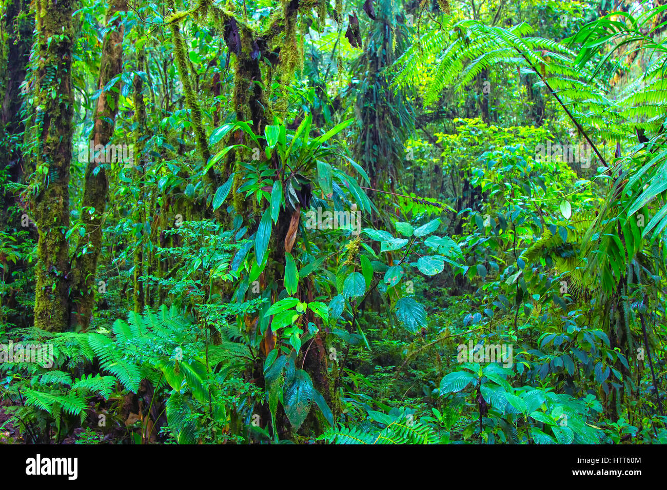 Monteverde Cloud Forest Reserve in Alajuela province - Stock Image