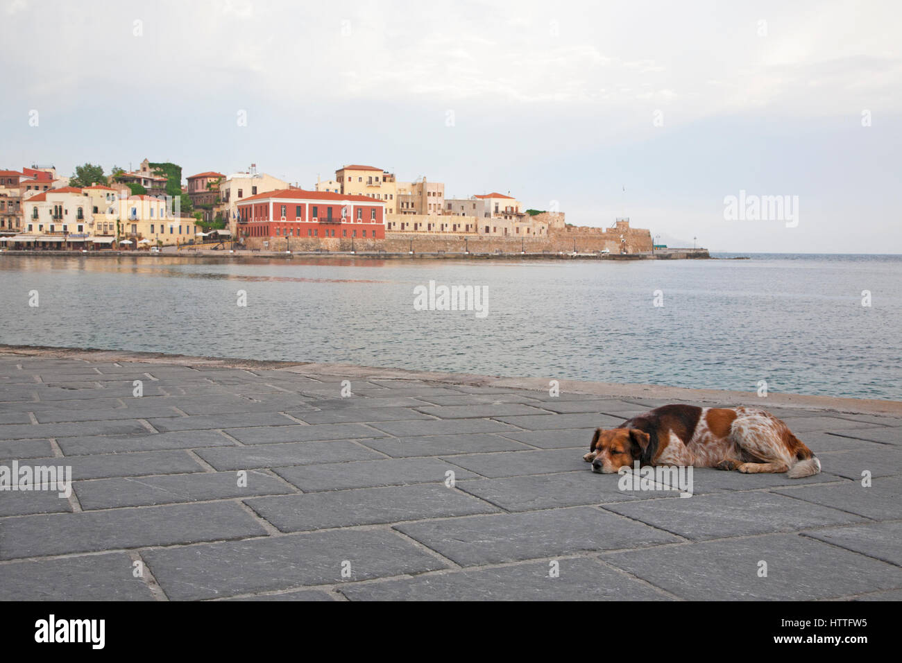 Dog sleeping on Venetian harbor waterfront in old town Chania - Stock Image