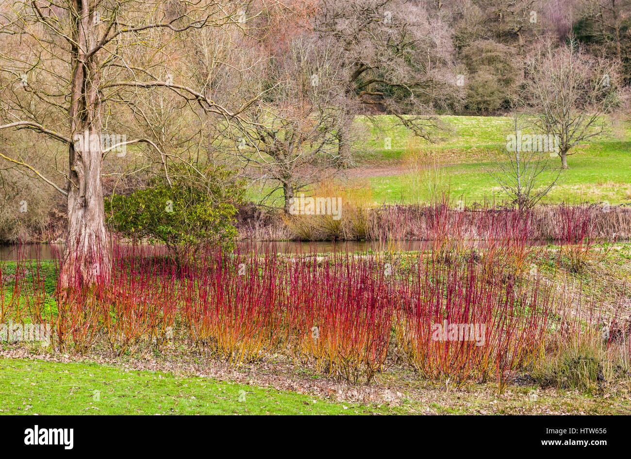 Landscape scene and red Cornus display at Chartwell, Kent, UK - Stock Image