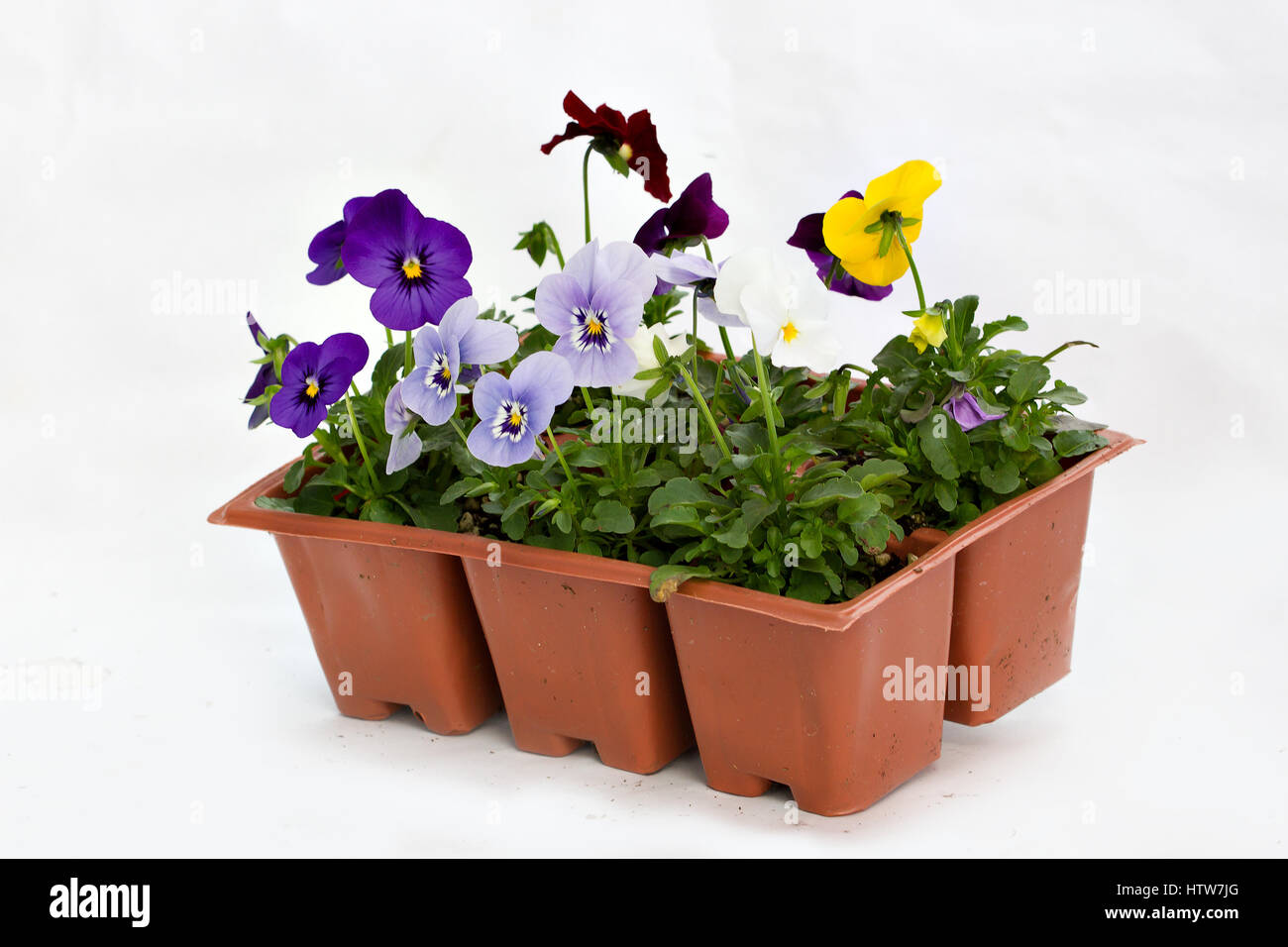 Jumbo Pack Colorful Annual Flowers Stock Photos Jumbo Pack