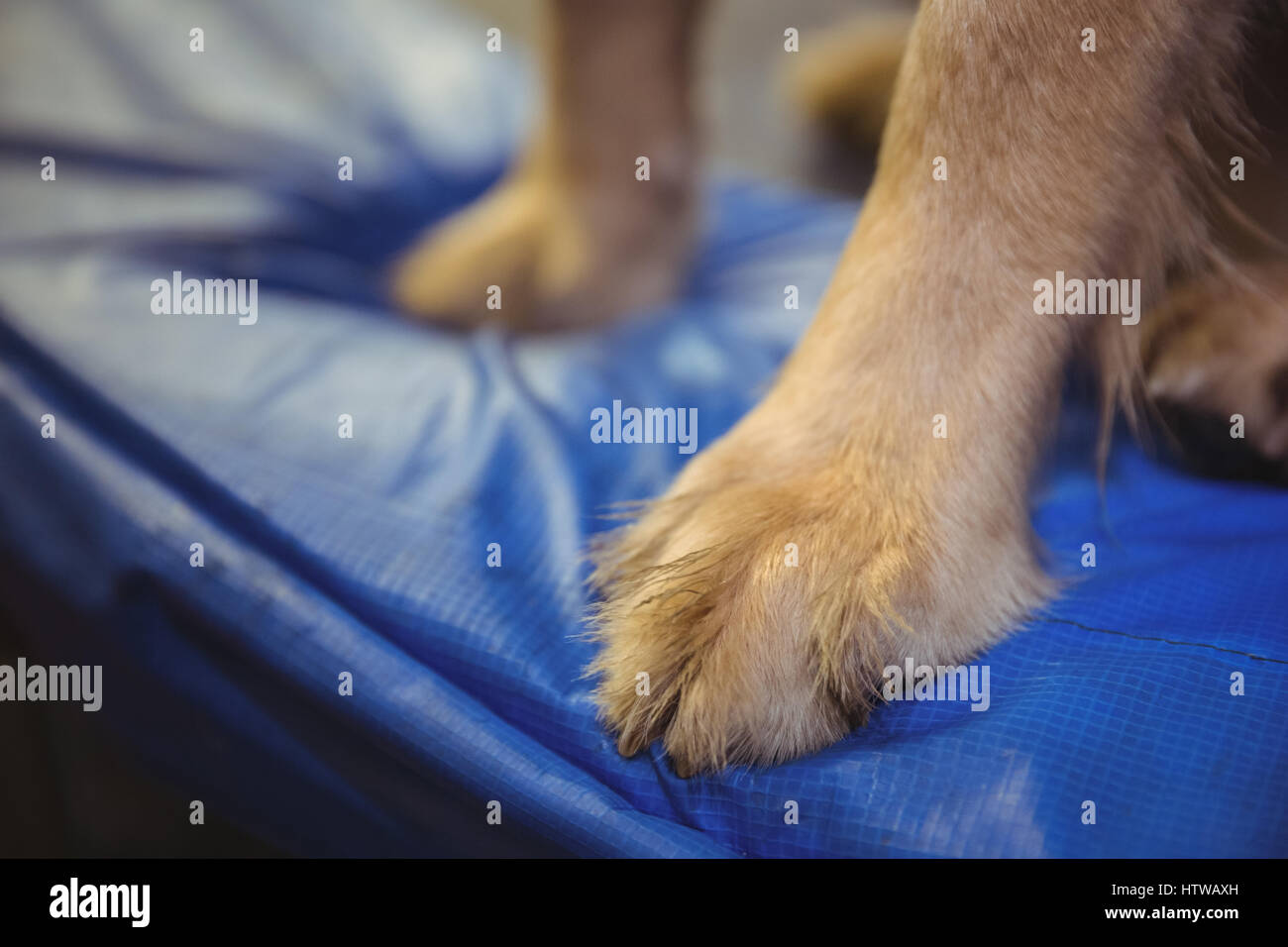 Dog paws on dog bed in dog care center - Stock Image