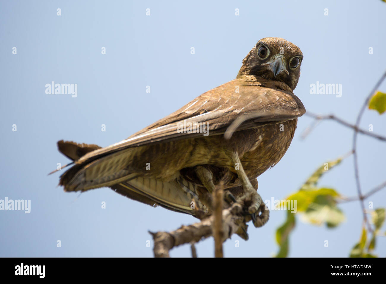 Scary Soar Stock Photos & Scary Soar Stock Images - Alamy