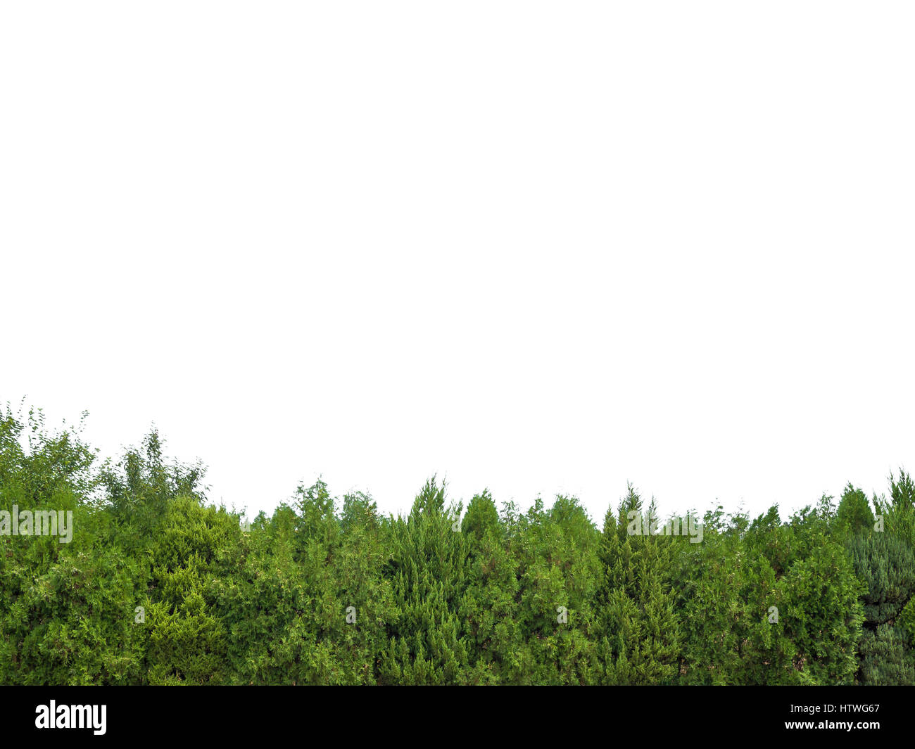 Green trees isolated - Stock Image