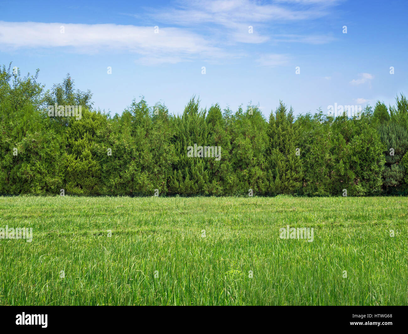 Green grass and trees - Stock Image