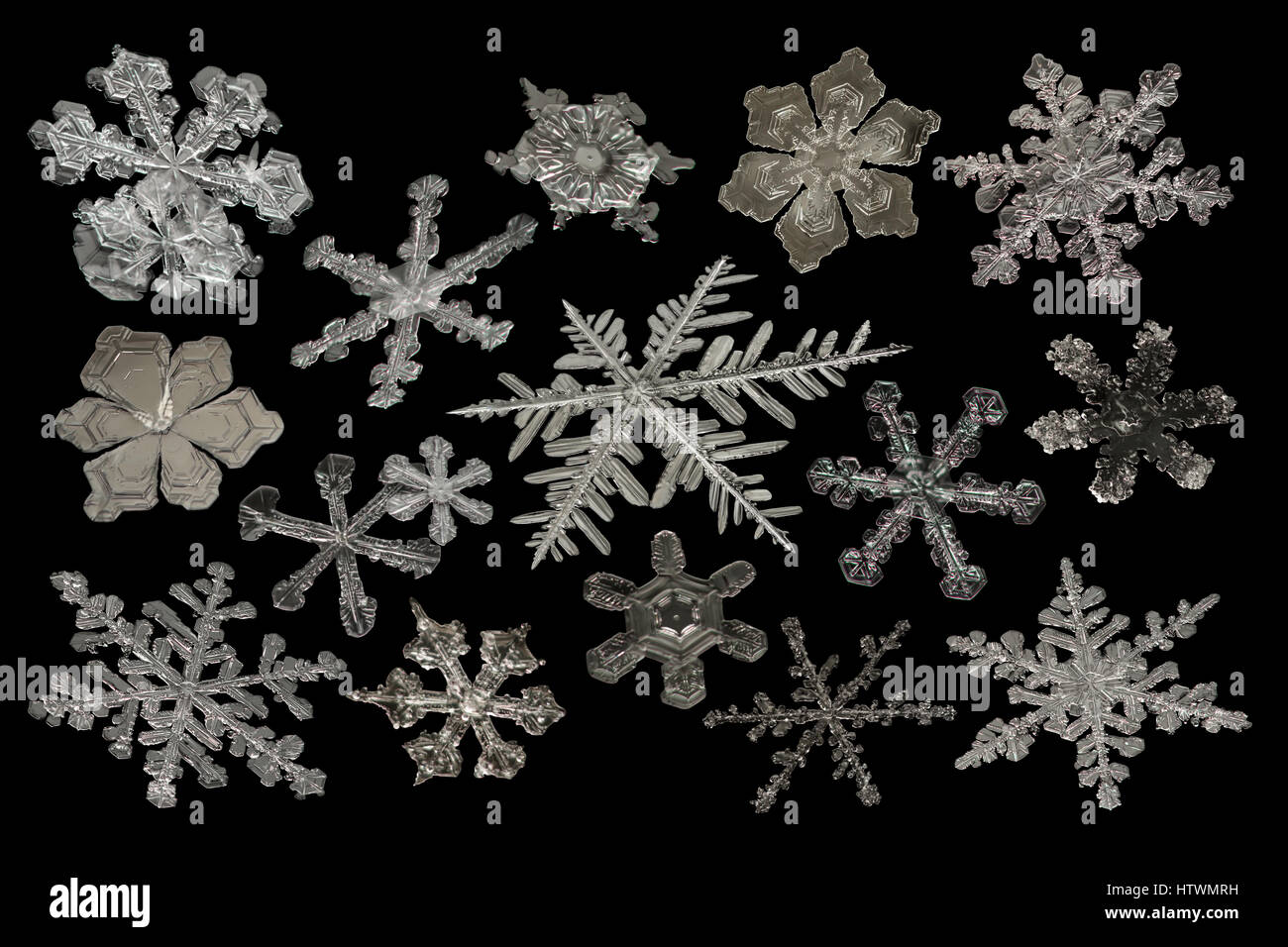 Extreme magnification - Real snowflake compilation on black background - Stock Image