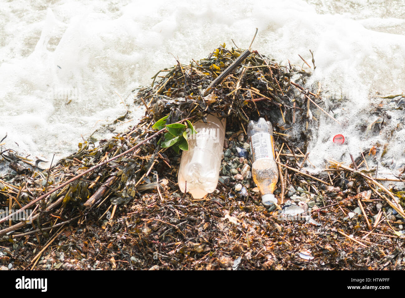 plastic bottles of irn bru washed up on beach in the Clyde Estuary - Stock Image