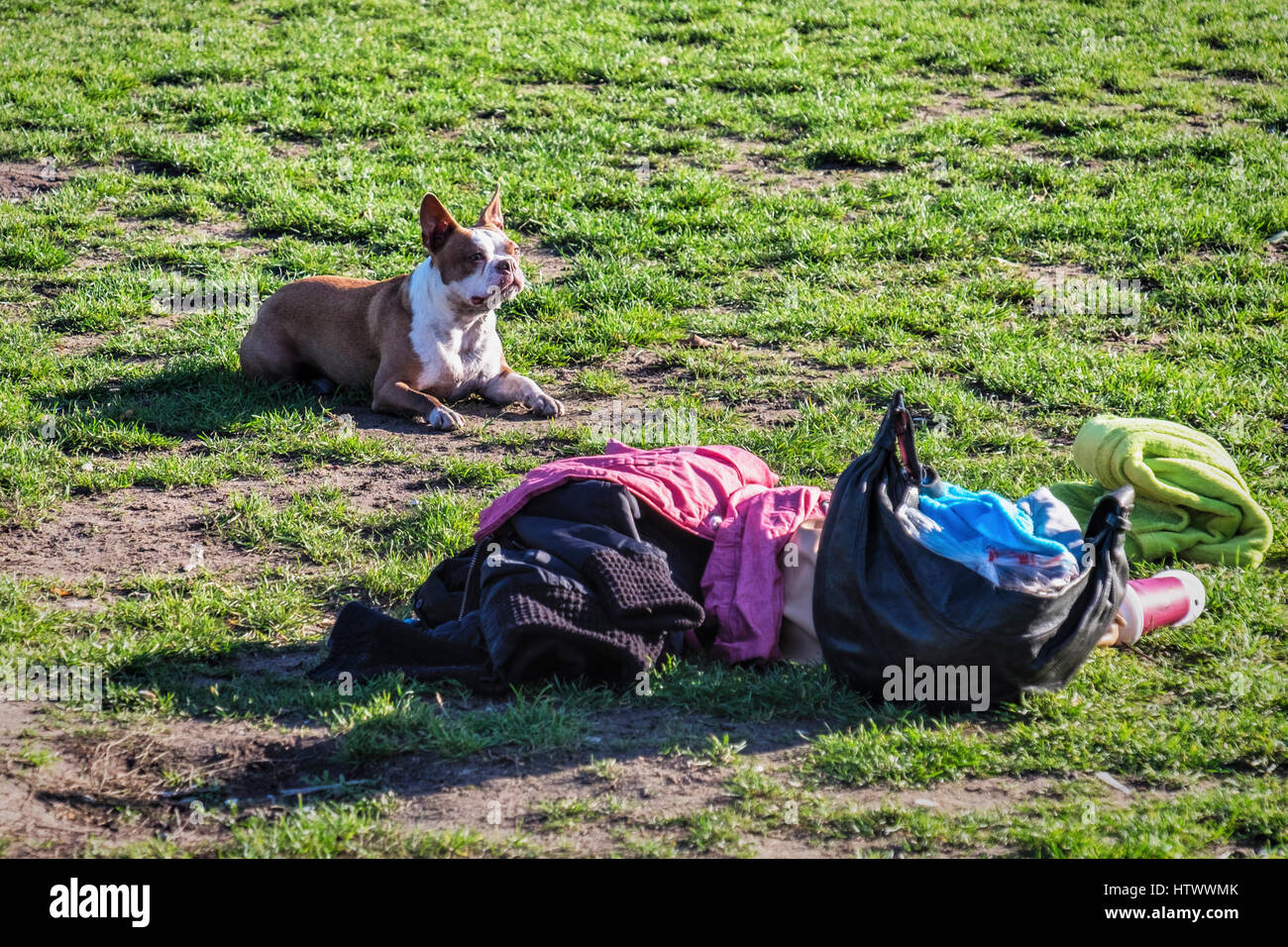 Berlin,Prenzlauer Berg. Mauer park, Wall park, A popular public park. Dog guarding possessions and bags in Mauerpark - Stock Image