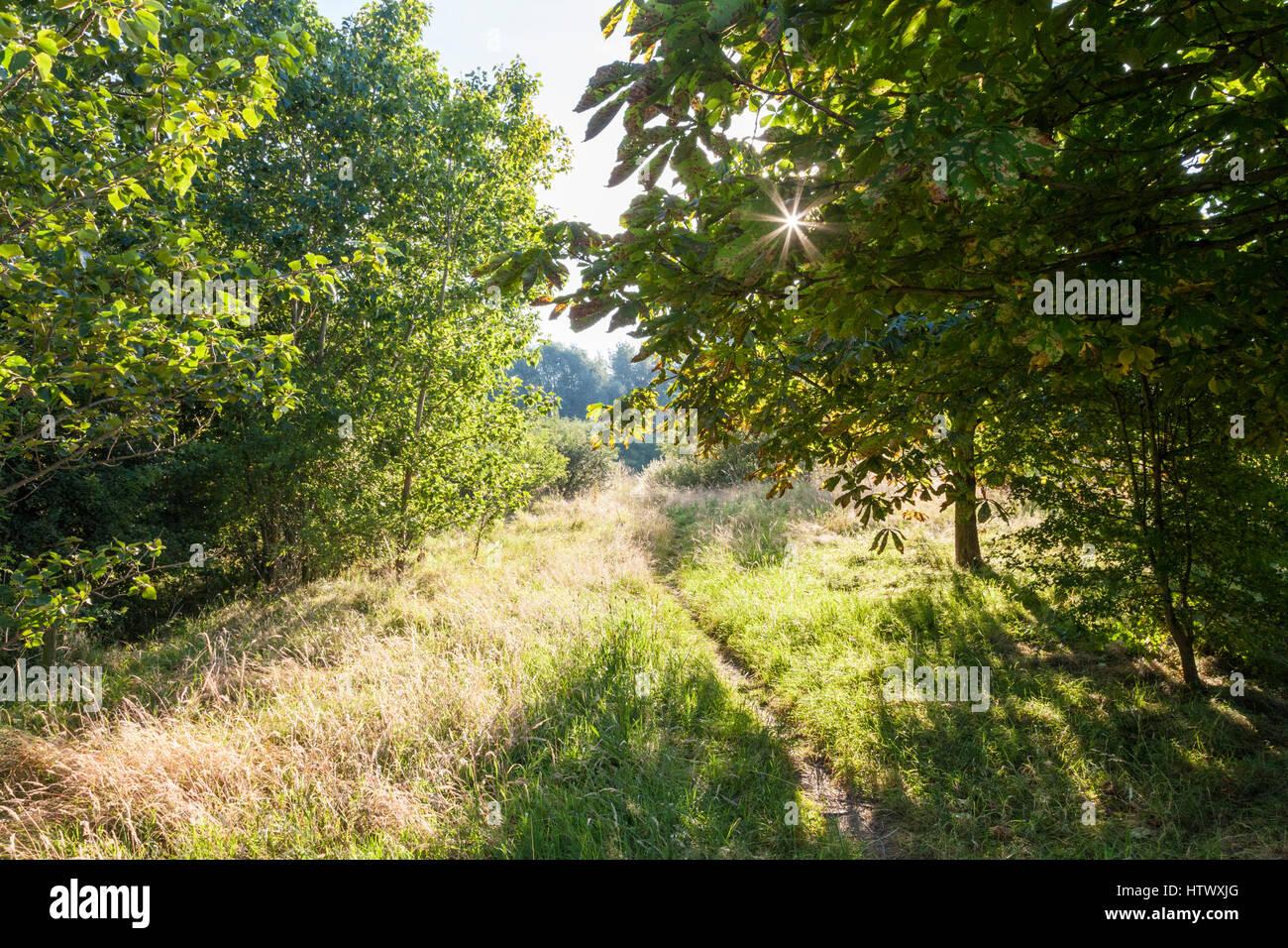 Sunlight shining through the trees, Nottinghamshire, England, UK - Stock Image