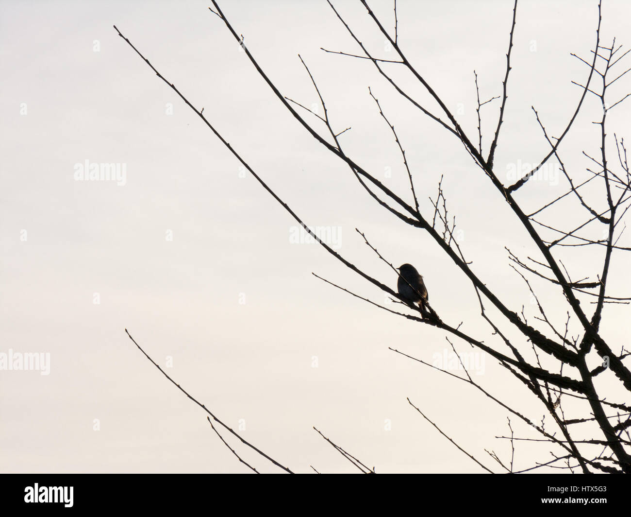 A bird sits in the tree at sunset. - Stock Image