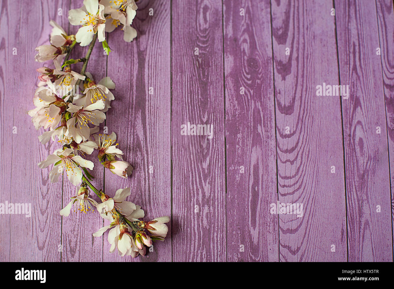 Spring Flowering Branch On Wooden Background Peach Blossoms Stock
