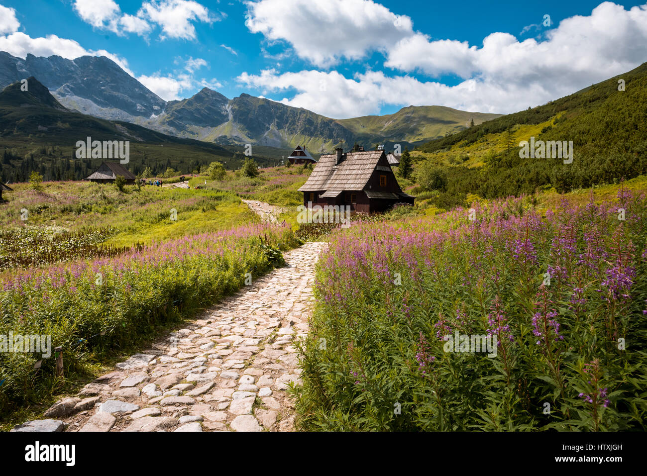 Summer View To Hala Gasienicowa In Valley, Tatra Mountains
