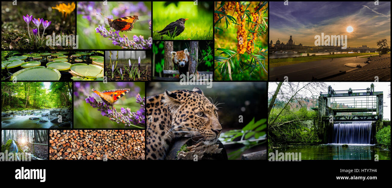 Best of nature - Stock Image