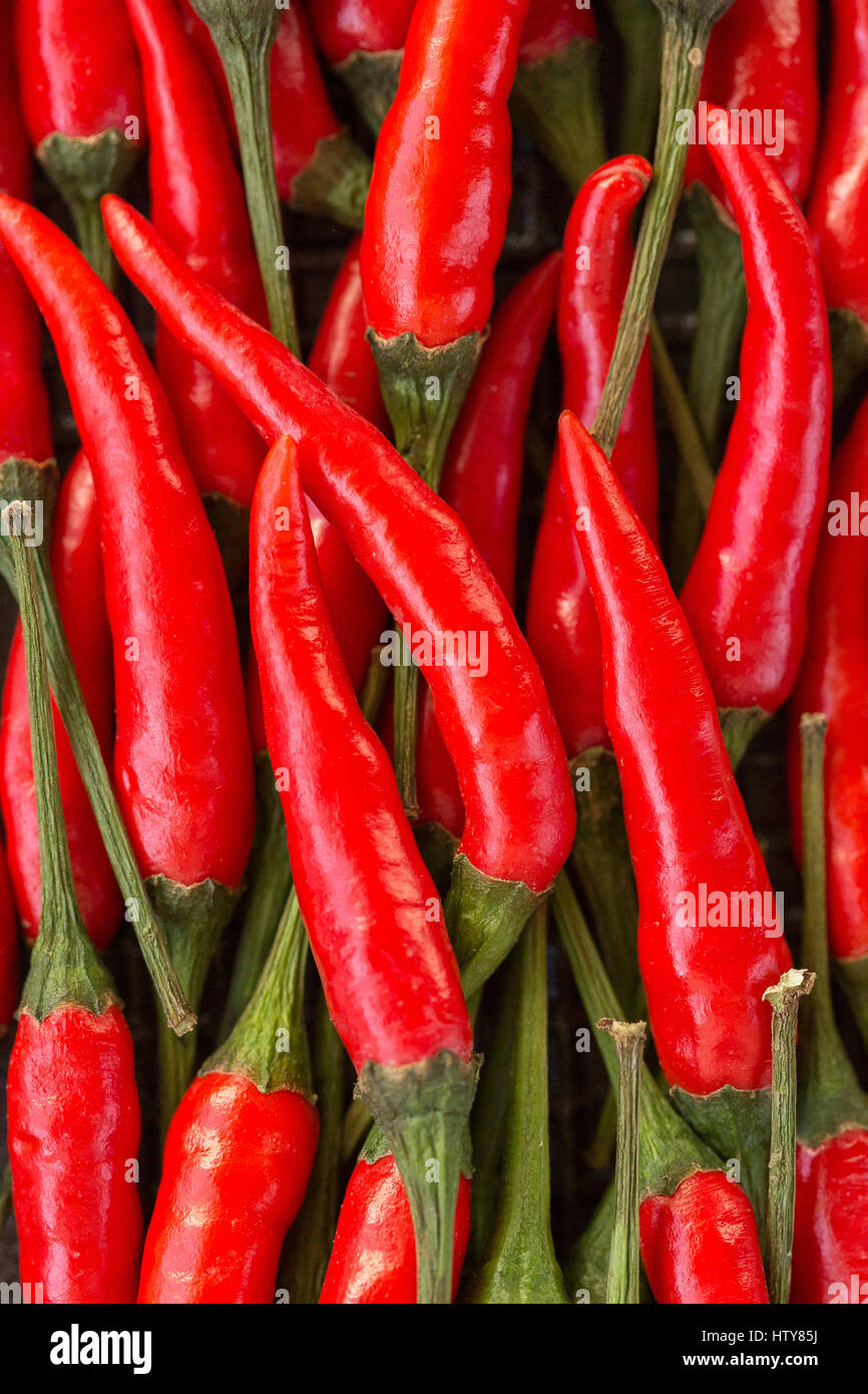 A lot of red hot chilli peppers as background. a concept hot spice for food. top view, flat lay. Concept red food, - Stock Image