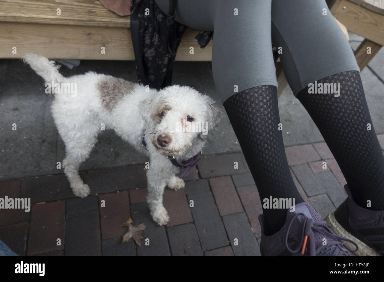 Good dog waits patiently next to his master as she drinks a latte. - Stock Image