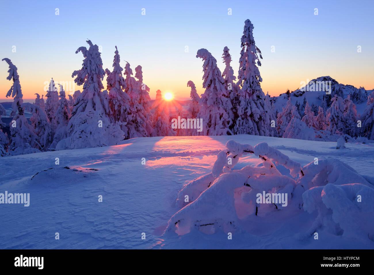 Sunset, Arbermandl, snowy spruces, Arber, Natural Preserve Bavarian Forest, Lower Bavaria, Bavaria, Germany - Stock Image