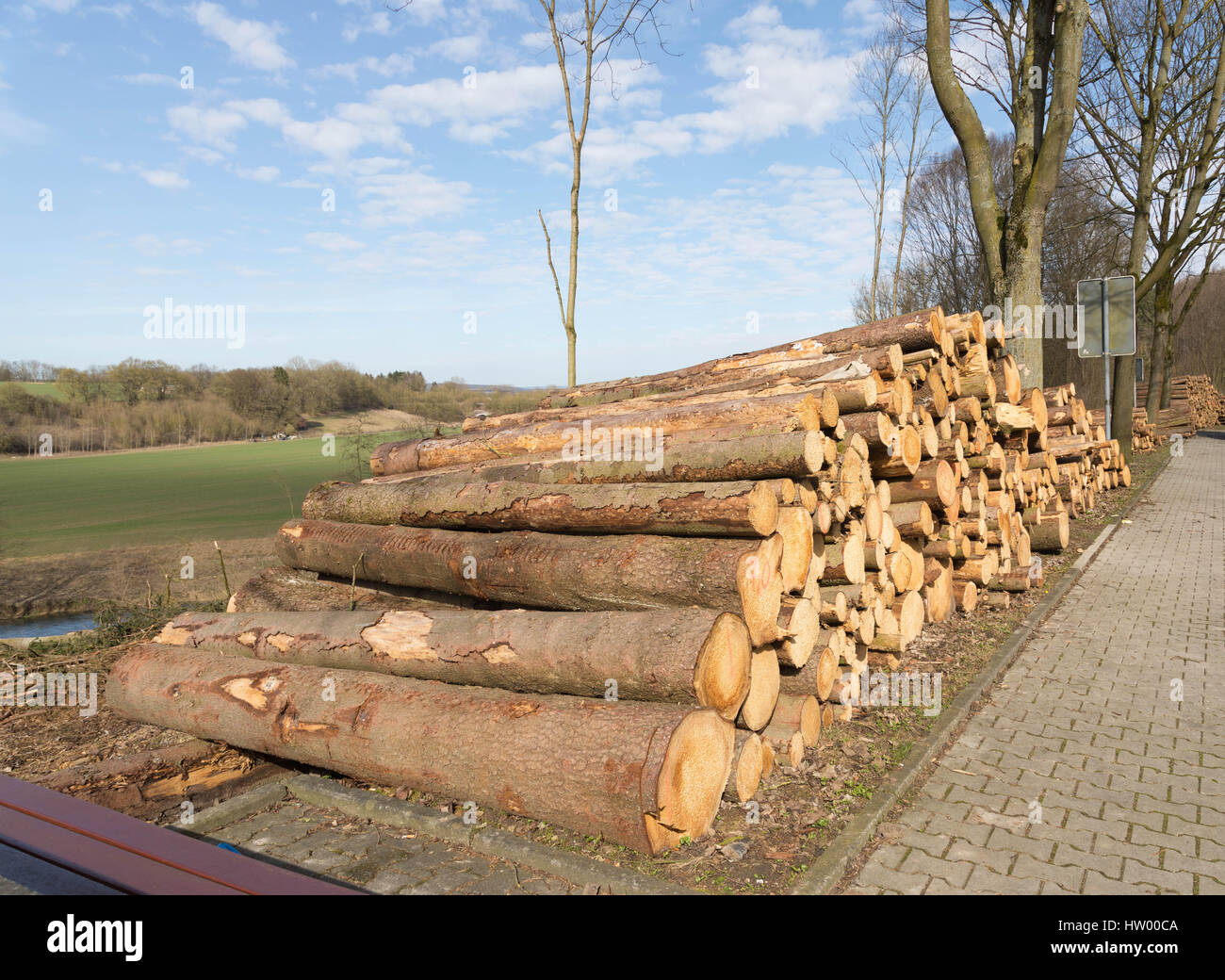 Freshly cut tree logs piled up near the road - Stock Image