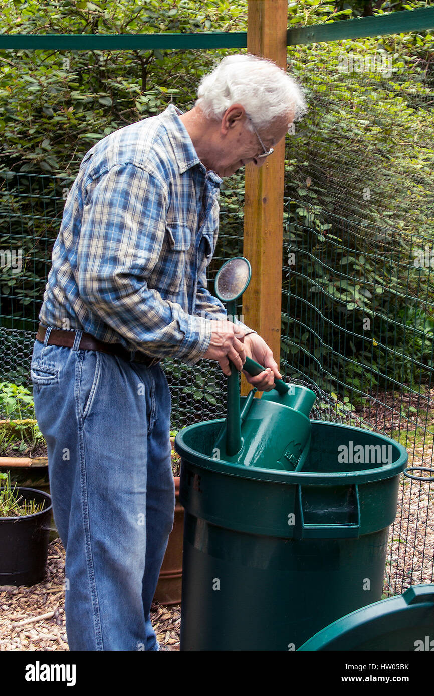 Man filling his watering can from a large garbage can of water beside his garden, in western Washington, USA - Stock Image
