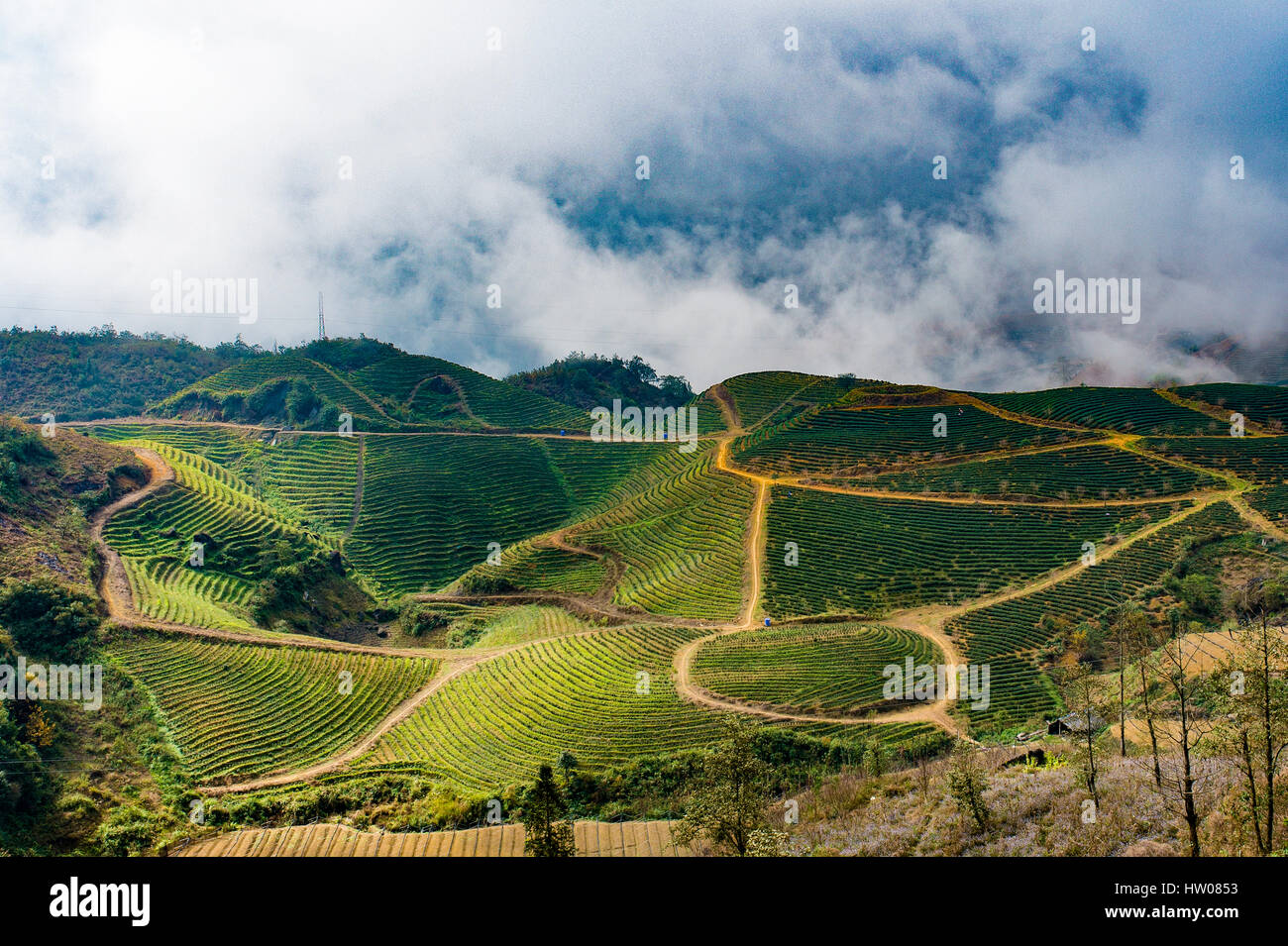 Many terraced rice fields at sunny day in Sapa, Northern Vietnam. The northwest market town of Sapa is colorful - Stock Image