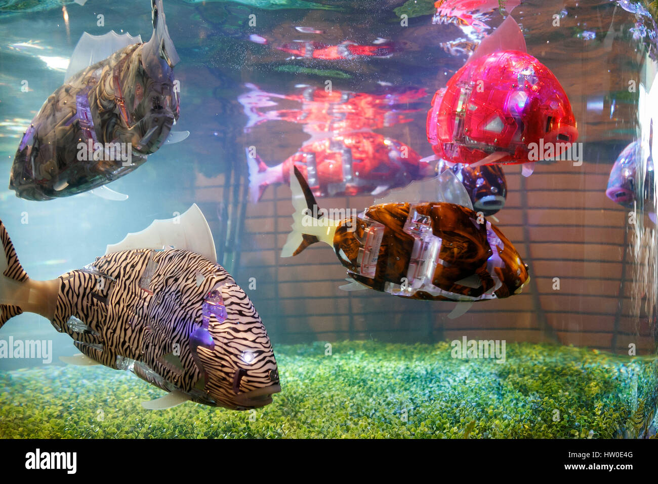 Tokyo Japan 15th March 2017 Fish Robots Swim Into The Fish Tank