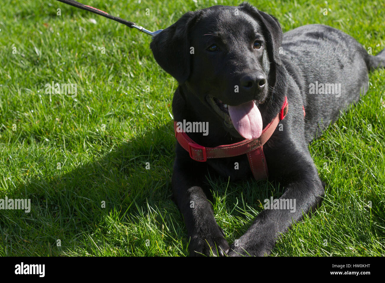 Dogs playing in Bute park, Cardiff with their owners. - Stock Image