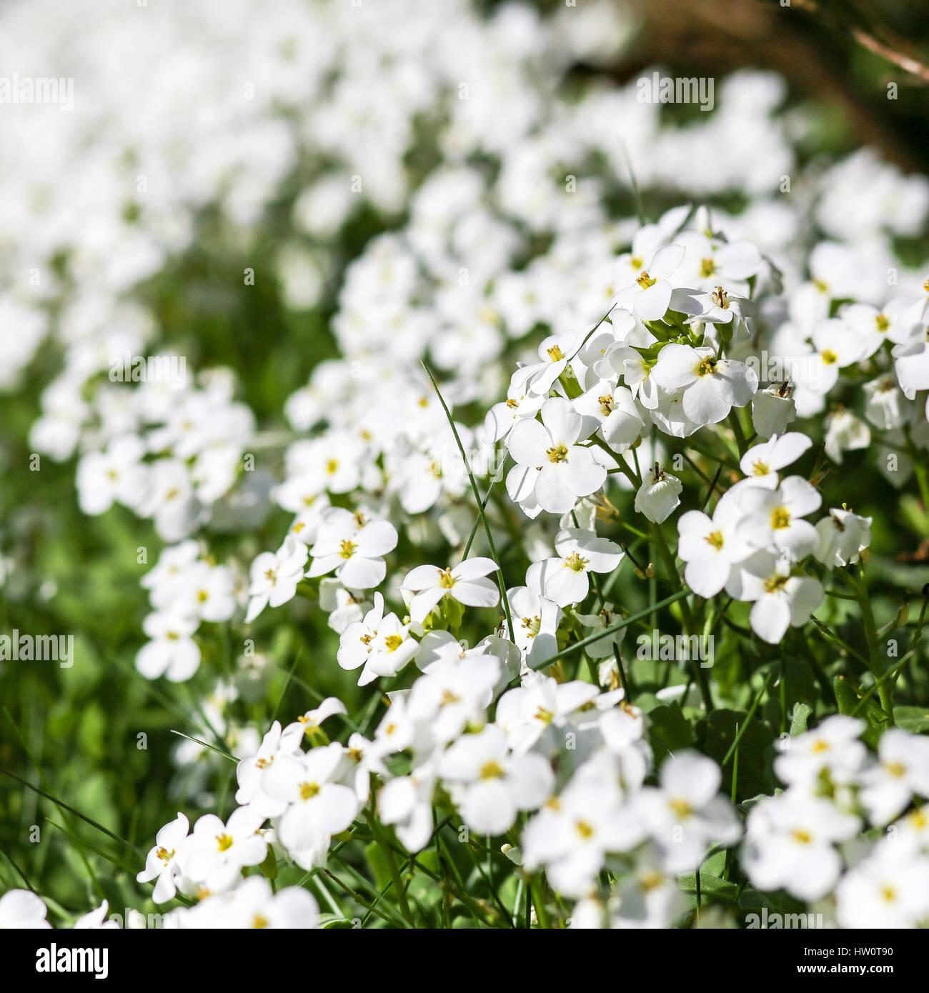 Four Petals Stock Photos Four Petals Stock Images Alamy