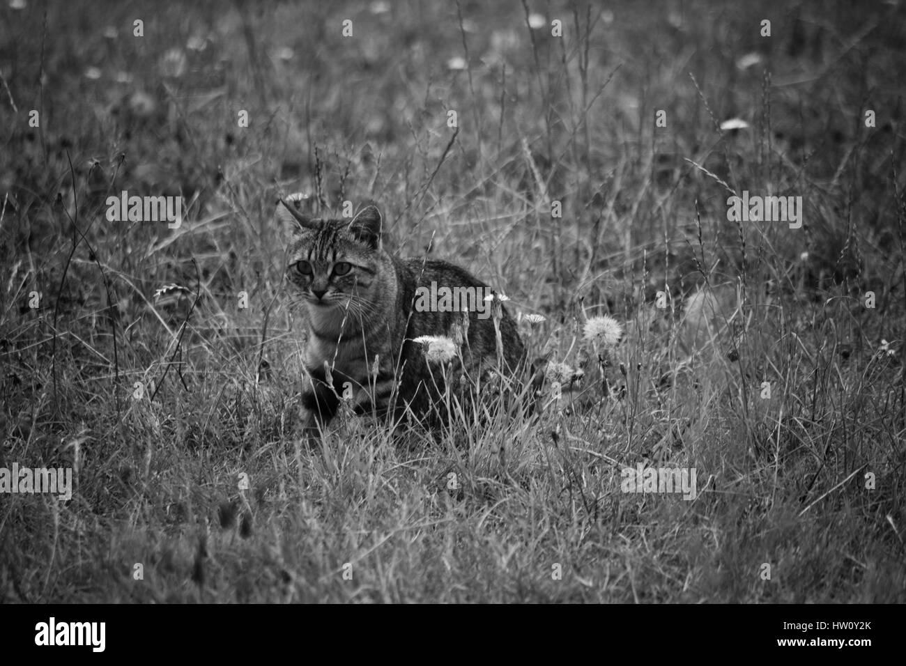 jeune chaton . - Stock Image