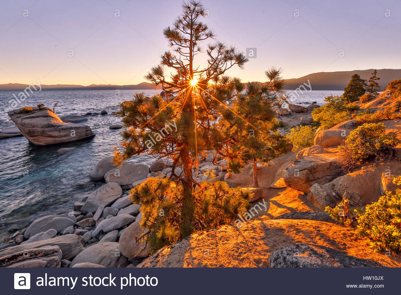The sun filters through a pine tree near Bonzai Rock in Lake Tahoe. - Stock Image