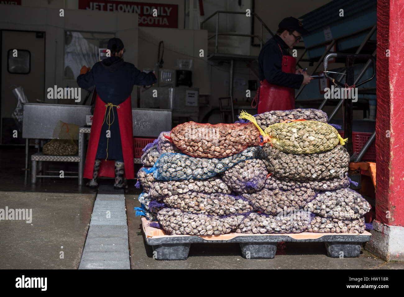Clams in netted sacks sitting on a pallet, at a seafood outlet, on Granville Island, Vancouver. - Stock Image