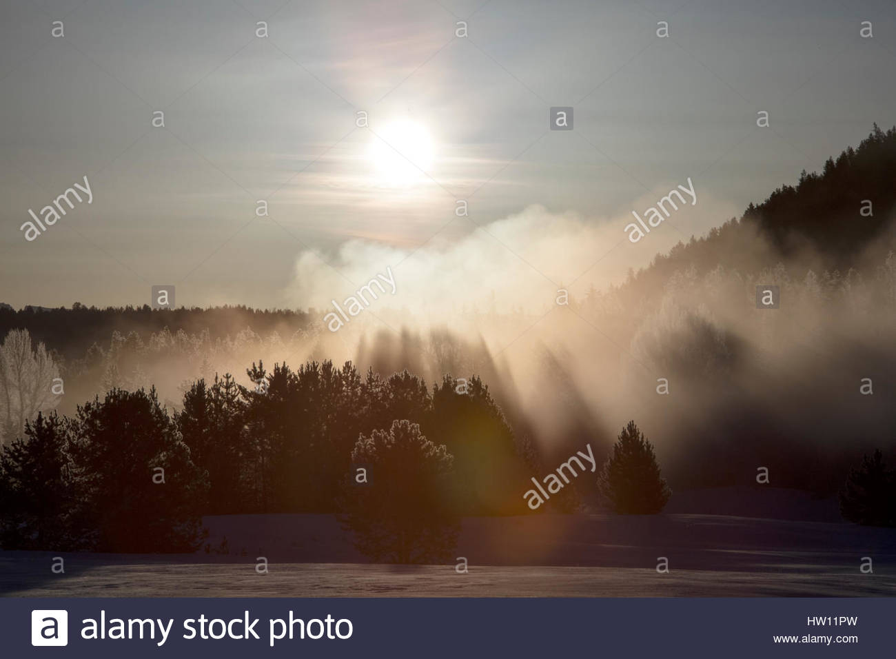 The sun shines through the frozen mist that blankets a forest stand. - Stock Image