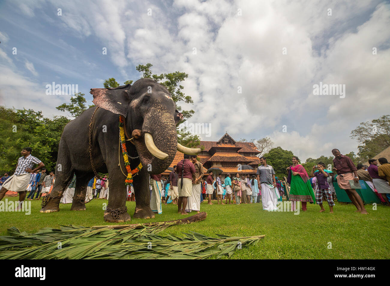 Elephant  eye and thrissur festival - Stock Image