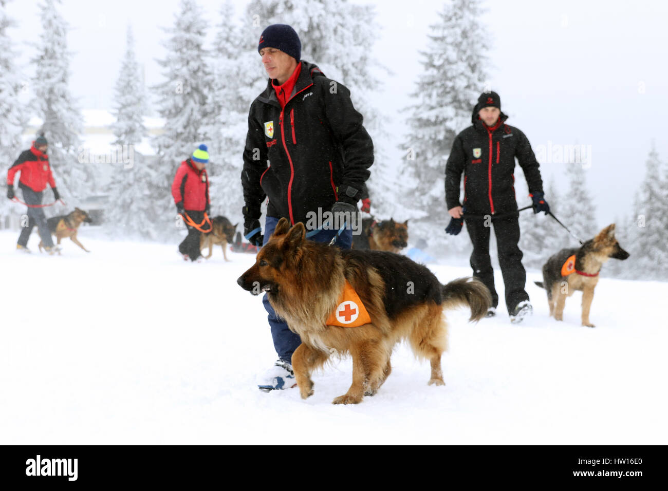 Rescuer from the Mountain Rescue Service at Bulgarian Red Cross and his dog are participating in a training for - Stock Image