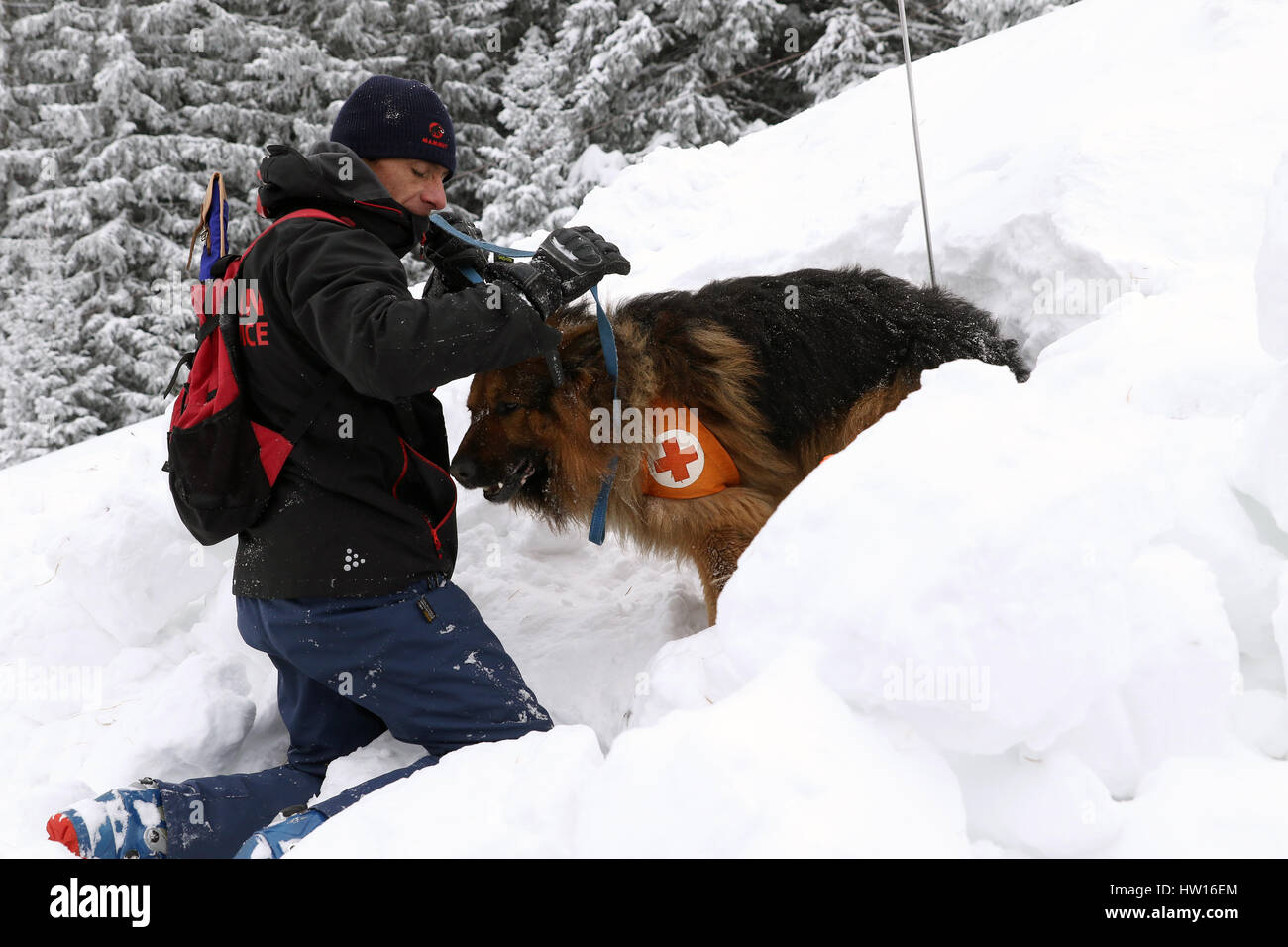 Rescuer from the Mountain Rescue Service at Bulgarian Red Cross and his dog are participating in a training for Stock Photo