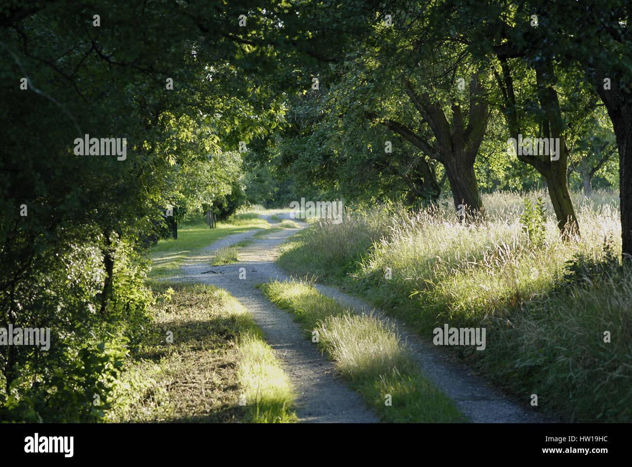 Country lane, Feldweg - Stock Image