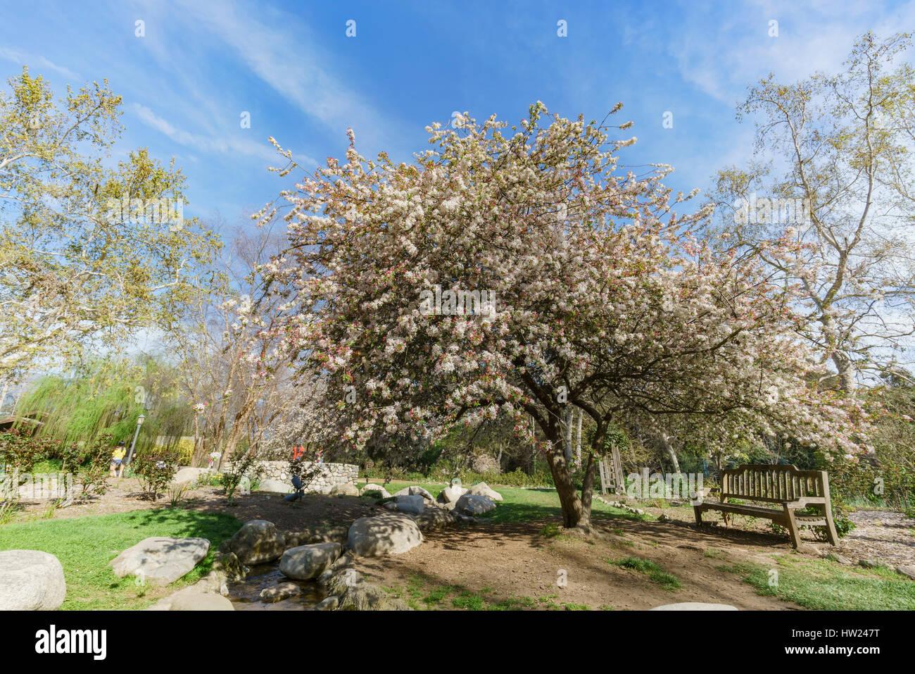 Descanso Garden Stock Photos & Descanso Garden Stock Images - Alamy