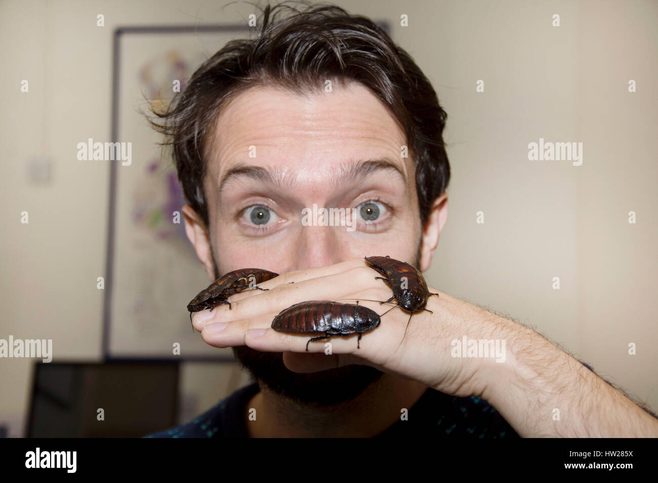 Wales, United Kingdom. January 26 2017.   Dr Tim Cockerill is pictured holding three Madagasgan Hissing Cockroaches - Stock Image