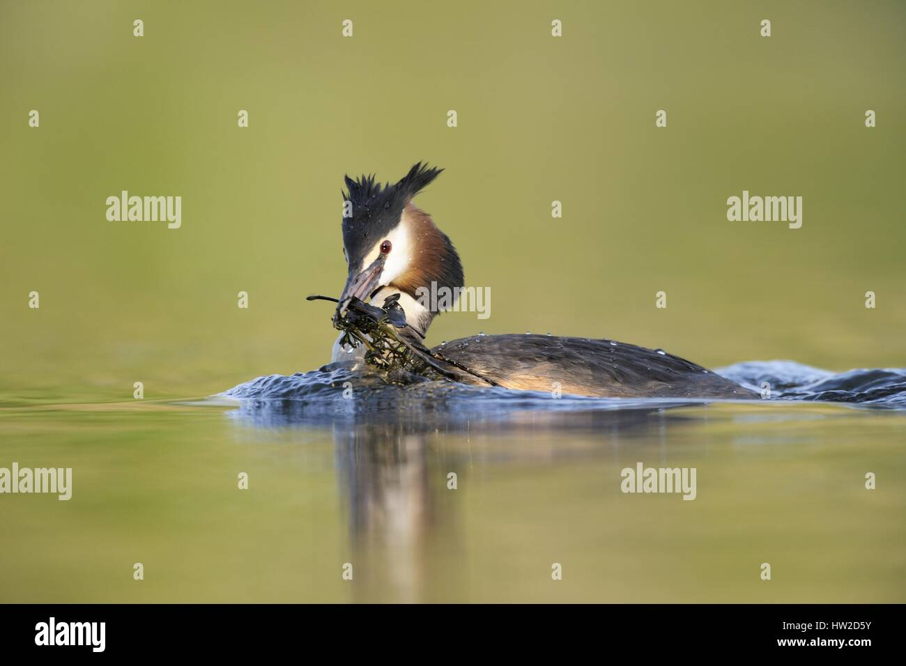 animal animals - Stock Image