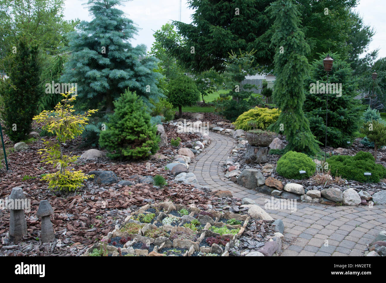 Conifer Garden - Stock Image