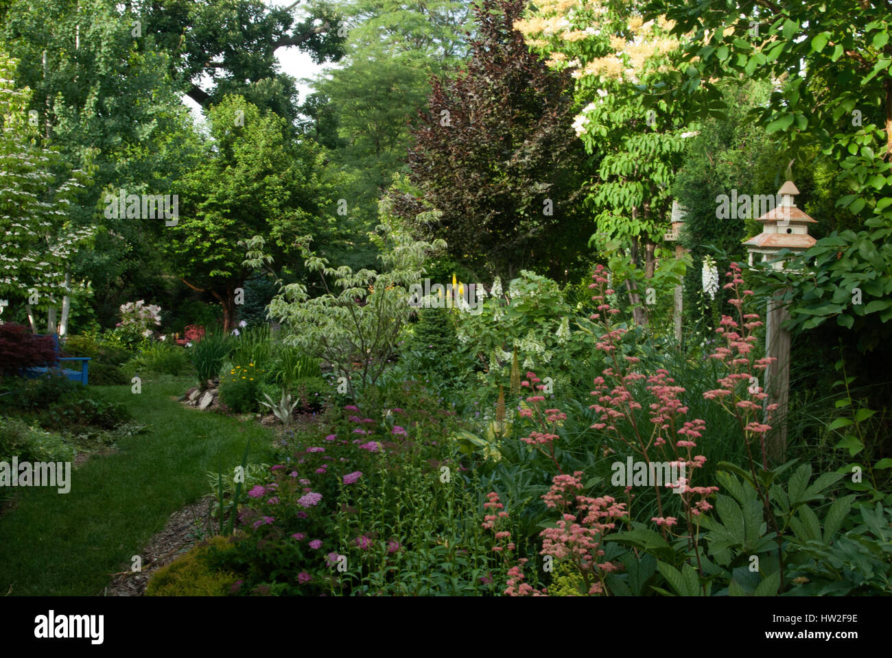 Summer Garden with Birdhouses, Rodgersia  if foreground, Variegate Dogwood Cherokee Daybreak, Rohanni Beech - Stock Image