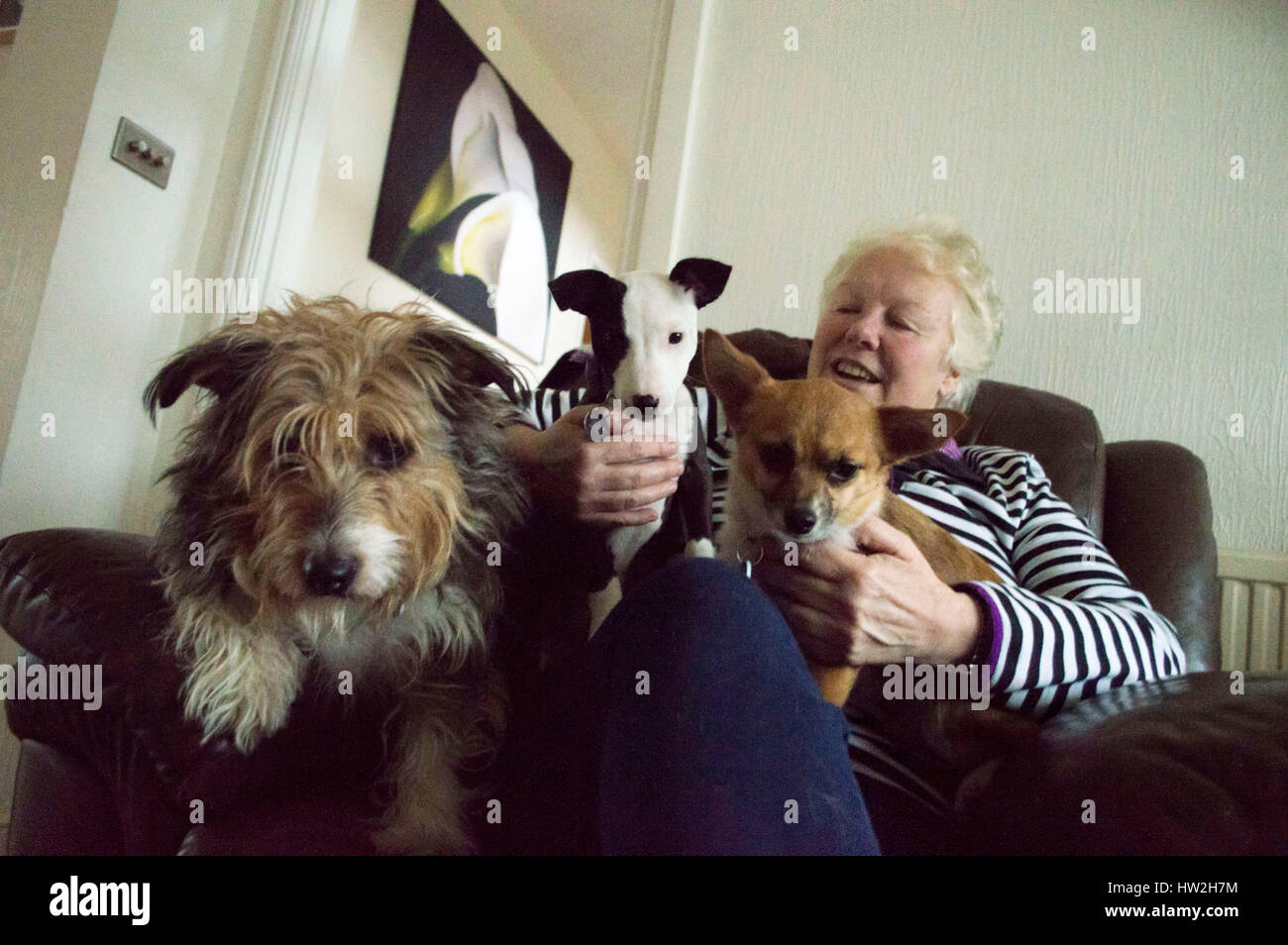 BRIDGEND, UK. Julie Wort, from Bridgend, runs the Wagadog Inn, as well as fostering many dogs from Animal Rescue - Stock Image
