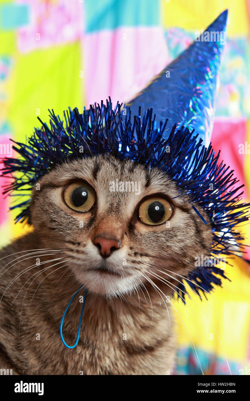 Ridiculous cat in a celebratory cap. A panic and bewilderment - Stock Image
