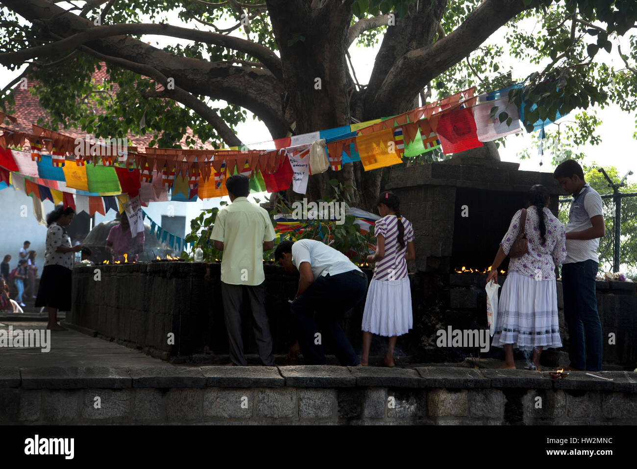 Dambulla Sri Lanka People Lighting Butter Lamps Bo Tree - Stock Image