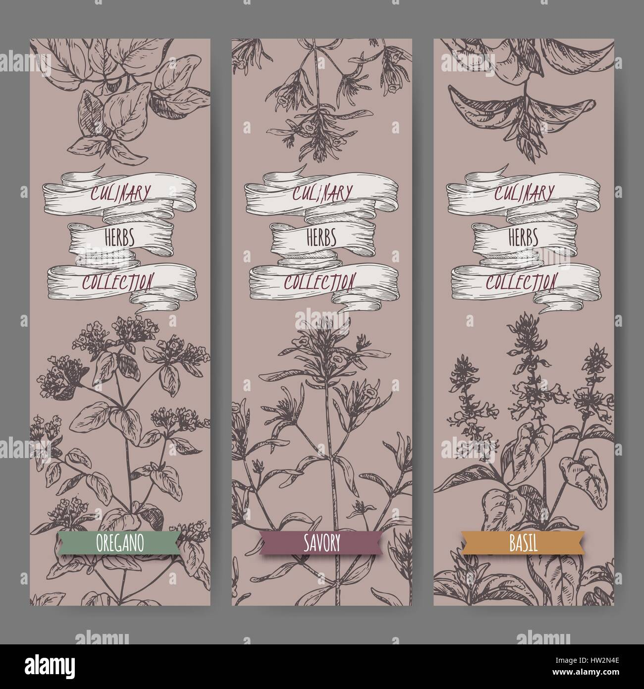 Set of three vector banners with oregano, savory, basil sketch. Stock Vector